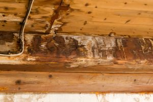 Structural Survey in France - wood rot